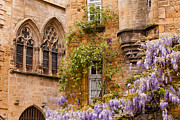 Wisteria In Bloom Framed Prints - Sarlat wisteria Framed Print by Julian Elliott