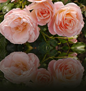 Christiane Schulze Digital Art Posters - Satin Roses Poster by Christiane Schulze