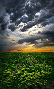 Phil Koch Framed Prints - Saturemation Framed Print by Phil Koch