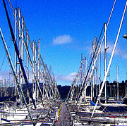 Sausalito Metal Prints - Sausalito Sailboats Metal Print by Jerome Stumphauzer