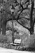 Park Benches Photos - Savannah Afternoon - Black and White 2X3 by Carol Groenen