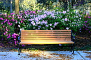Park Benches Photo Framed Prints - Savannah Bench Framed Print by Carol Groenen