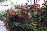 Red Photographs Framed Prints - Savannah Georgia Red Roses and Gates Architecture Framed Print by Kathy Fornal