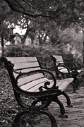 Park Benches Framed Prints - Savannah Park Framed Print by Alexandra Draghici