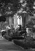 The Garden Bench Prints - Savannah Scenic in Black and White Print by Suzanne Gaff