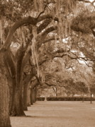 Live Oaks Photo Framed Prints - Savannah Sepia - Emmet Park Framed Print by Carol Groenen