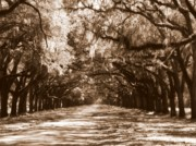 Live Oaks Framed Prints - Savannah Sepia - The Old South Framed Print by Carol Groenen