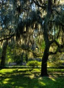 Live Oaks Framed Prints - Savannah Sunshine Framed Print by Mel Steinhauer