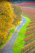 Sonoma County Vineyards. Prints - Savoring Sonoma Print by Tirza Roring