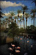 Flamingos Posters - Savoring the Last Light Poster by Laurie Search