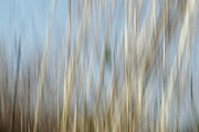 Blue And Brown Photos - Sawgrass in Motion by Benanne Stiens