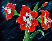 Fram Cama - Scarlet Amaryllis