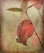 Colors Of Autumn Prints - Scarlet Leaf Print by Angie Vogel