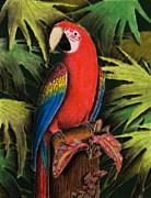 Jeanette K - Scarlet Macaw