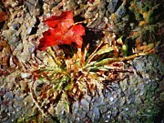 RC deWinter - Scarlet on Stone
