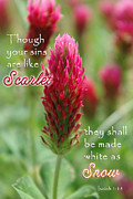 White As Snow Prints - Scarlet Sins Isaiah Print by Robyn Stacey