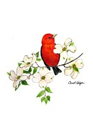 Tanager Originals - Scarlet Tanager  by Carol Veiga