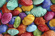Sea Shell Art - Scattered Colors by Carol Leigh