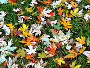 Scattered Leaves Print by Mariola Szeliga