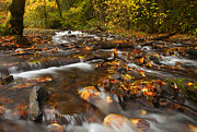 Stream Framed Prints - Scattered Leaves Framed Print by Mike  Dawson