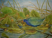Lily Pads Paintings - Scattered Purple Gallinules by Hannah Boynton