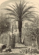 Tree Art Print Drawings Framed Prints - Scene in St. Augustine - The Date Palm 1872 Engraving Framed Print by Antique Engravings