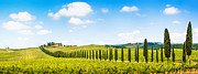 Grape Vineyard Posters - Scenic Italy Poster by JR Photography