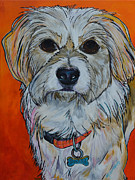Dog Art Paintings - Schatzi by Patti Schermerhorn