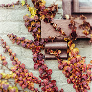 Burgundy Posters - Schenectady New York Picture of Autumn Leaves in the Stockade Poster by Lisa Russo