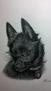 Michelle Harrington - Schipperke