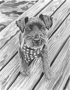 Schnauzer Black Dog Print by Robyn Saunders