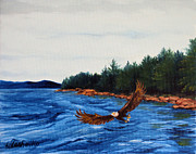 Laura Tasheiko - Schoodic Point Bald Eagle
