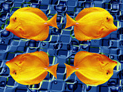 School Of Fish Digital Art - School Daze by Wendy J St Christopher