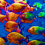 Under The Ocean  Digital Art Metal Prints - School of Piranha v3 - square Metal Print by Wingsdomain Art and Photography