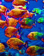 Under The Ocean  Digital Art Metal Prints - School of Piranha v3 Metal Print by Wingsdomain Art and Photography