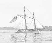Confederate Flag Prints - Schooner Clipper Ship Sketch Print by Linda Rae Cuthbertson