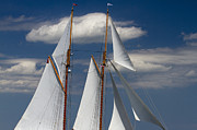Schooner Prints - Schooner Germania Nova Sails Print by Dustin K Ryan