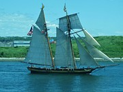 Wooden Ships Framed Prints - Schooner in Halifax Harbour Framed Print by John Malone