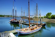 Schooners Art - Schooners in Lermonds Cove by Tim Sullivan