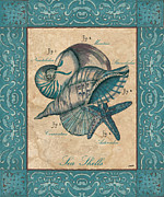 Shells Prints - Scientific Drawing Print by Debbie DeWitt