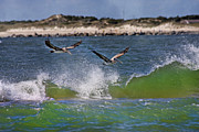 Pelican Prints - Scouting for a Catch Print by Betsy A Cutler East Coast Barrier Islands