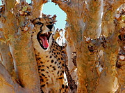 Cheetah Photo Originals - Screaming Cheetah by Marc Levine