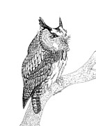 Awesome Drawings Originals - Screech Owl by Lee Halbrook
