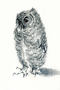 Birds Jewelry Prints - Screech owl nestling Print by Pat Oldham