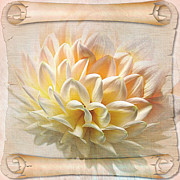Petals Digital Art Framed Prints - Scrolled Dahlia Framed Print by Kaye Menner