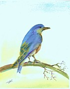 Scrub Jay Paintings - Scrub Blue Jay by David Patrick