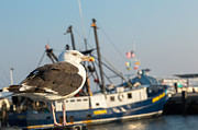 Seagull Metal Prints - Sea Bird Metal Print by Bill  Wakeley