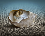 Sea Shell Prints - Sea Debris 106 Print by Walt Foegelle
