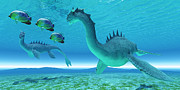 Corey Ford - Sea Dragon Fight