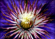 Freaky Metal Prints - Sea Flower Metal Print by Karen Wiles